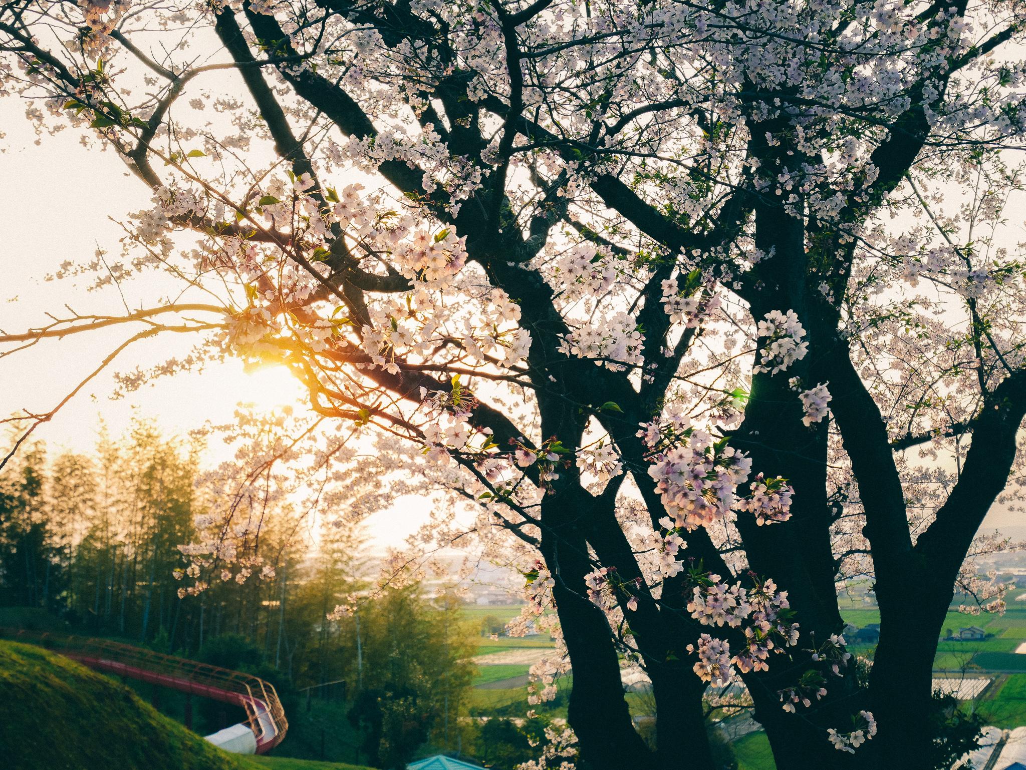 疲弊したこの国日本と、アート的思考の関係性