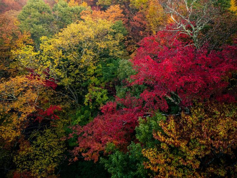 紅葉の季節撮影時のホワイトバランスについて
